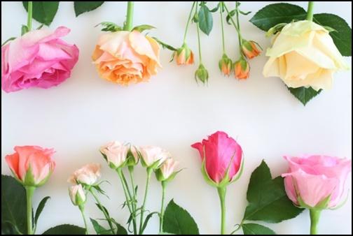 バラの花束の画像