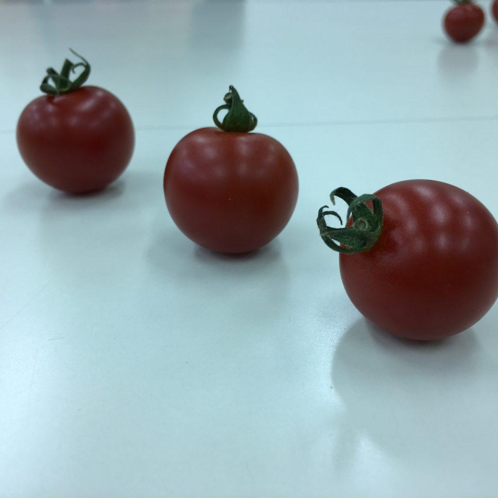 10、3個のトマトを撮影した画像