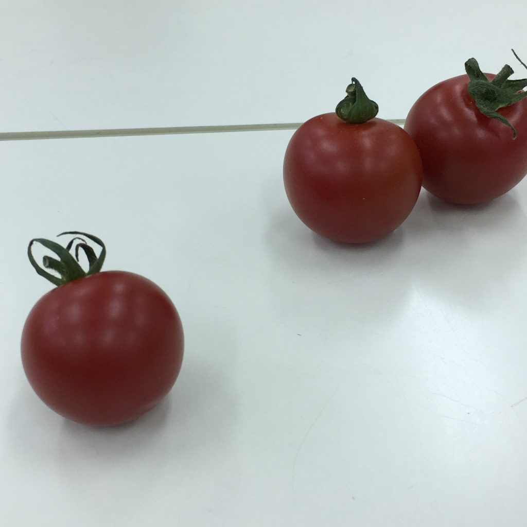 12、1個のトマトと2個となりあったトマトの画像