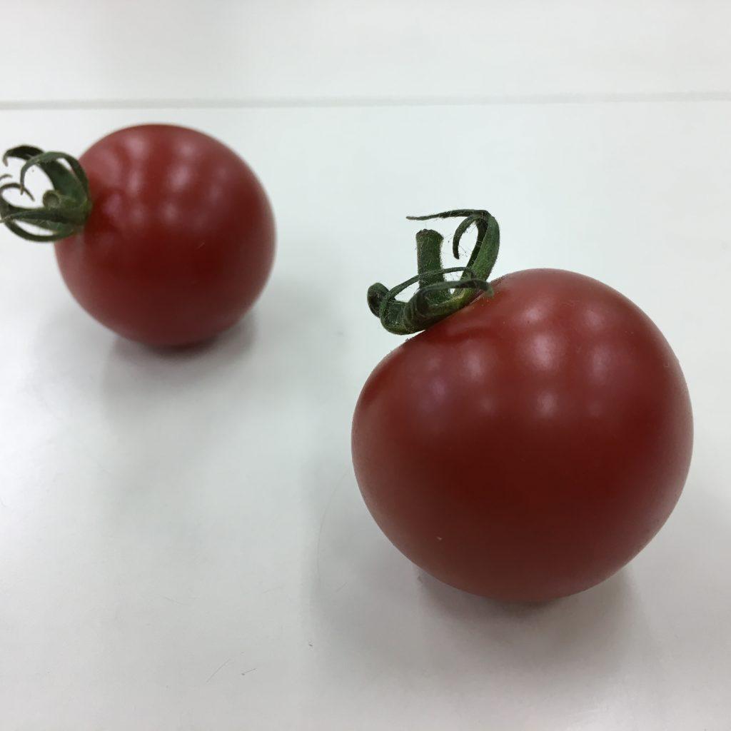 2個のトマトの写真
