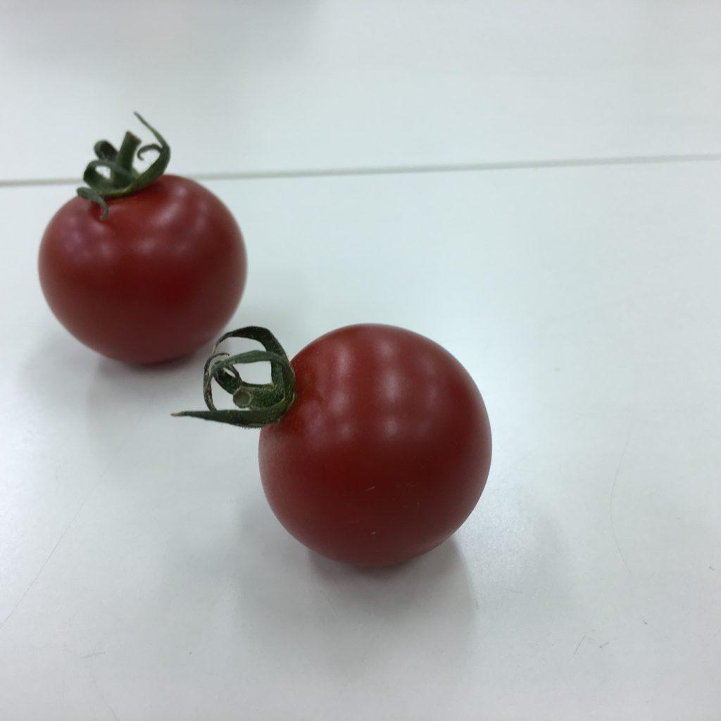 4、トマトに動きを出した画像