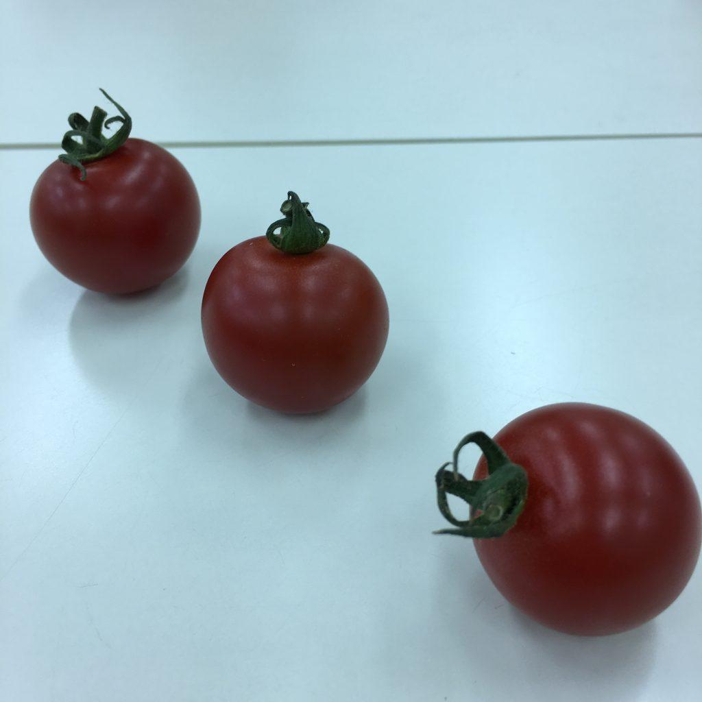 8、3個のトマトを撮影した画像
