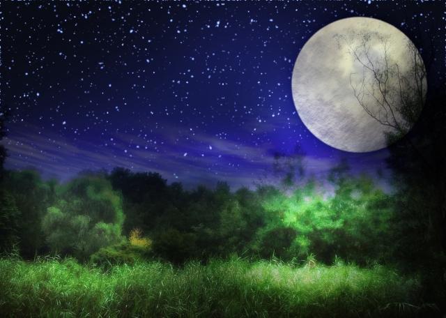 満月と林の画像