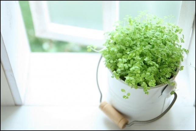 窓辺に置かれている寛容植物の画像